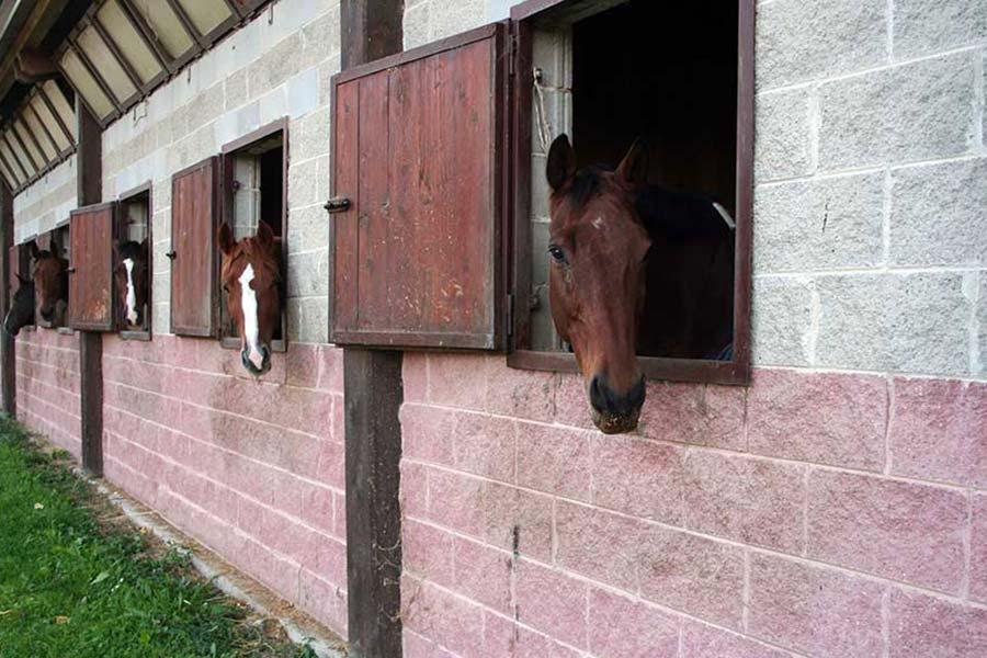 Cavalli nei box dell'allevamento del Ghiro